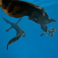 Nothosaurus. Foto Manimalworks.nl